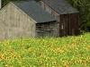 Barns in Field