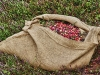 Cranberry Bags