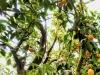 LOGEES GREENHOUSES-001-Edit