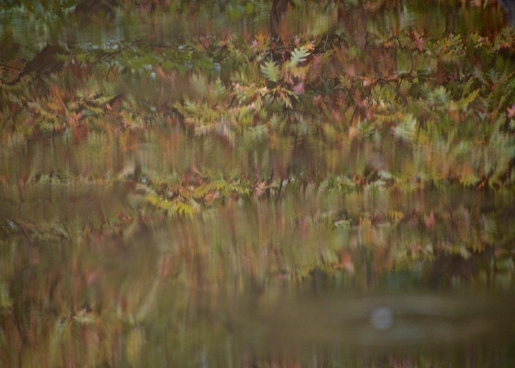 Leaf Reflections