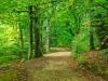 Leaf Covered Trail