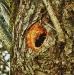 Squirrel\'s Hideaway