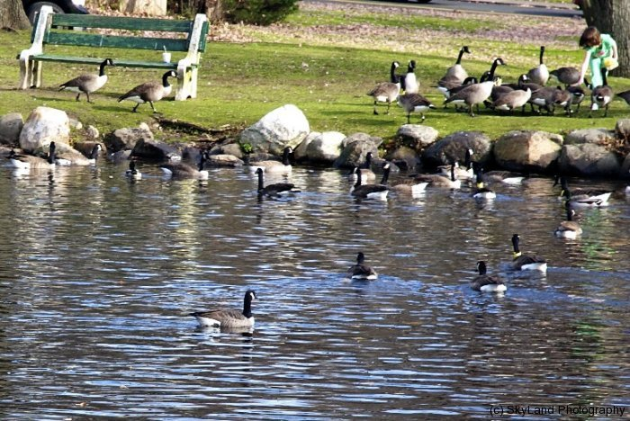 Town Center Pond
